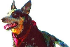Cash-music-dog