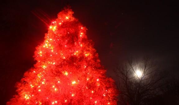 Beacon_tree